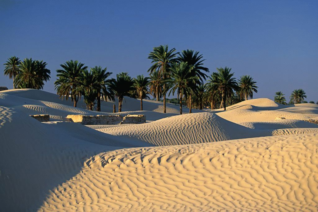 nature_desert_sand_dunes_palm_trees_tunisia_desktop_3504x2336_hd-wallpaper-1090883-1024x683.jpg